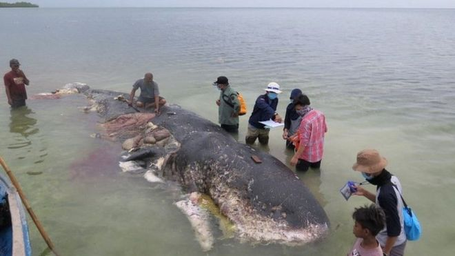 プラスチックゴミを大量に飲み込んでいた鯨の死体
